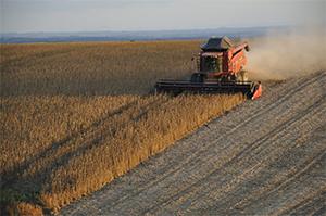 Sector de la Agricultura
